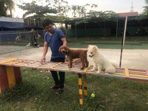 Trung tâm huấn luyện chó giáo trình chuẩn quân đội